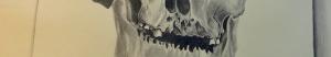 skullhead1