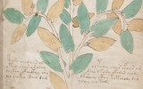 Voynich manuscript – secret knowledge or brilliant hoax?