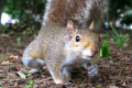 Squirrely squirrels