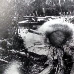 Initially Kauri logs were transported using natural streams