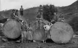Historic photos of New Zealand's Kauri wood bloom