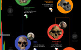 Human Evolution Infographic