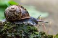 Celebration of Snails