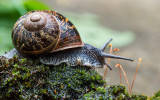 Celebration of Snails