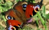 iNaturalist: citizen science in your backyard